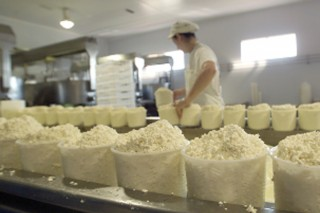 Curso sobre elaboración de productos lácteos