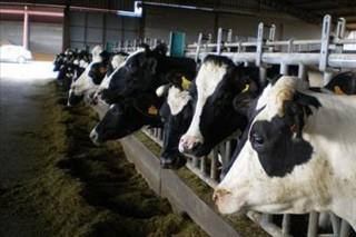 El fin de las cuotas genera un doble mercado de la leche