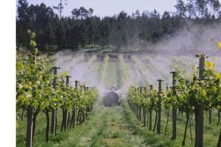La Xunta trabaja en una aplicación para recibir en el móvil las previsiones de enfermedades de las viñas