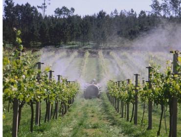 Recomendaciones para el cuidado de la viña durante los próximos días