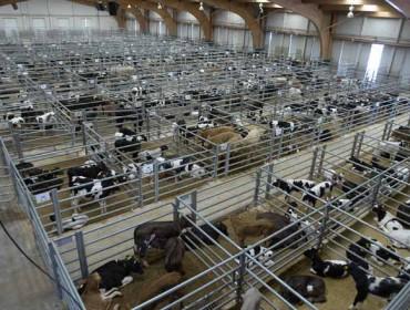 Coronavirus: Se suspenden los mercados ganaderos de Silleda y de Castro de Riberas de Lea hasta nuevo aviso