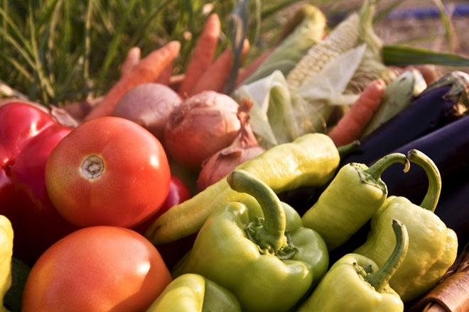 Recomendaciones para el cultivo de la huerta en julio