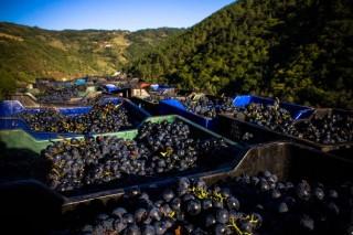 """Tejerina anuncia un """"apartado específico"""" para autorizar la plantación de viñedos en denominaciones de origen"""