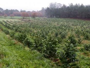 El Plan Forestal y la moratoria al eucalipto se aprobarán sin el apoyo de la oposición