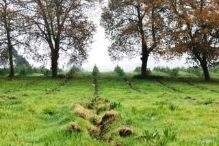 El Parlamento pide regular las nuevas plantaciones de eucaliptos