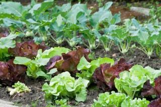 Consejos para el cultivo de la huerta en marzo