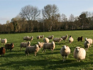Coronavirus: El Ministerio anuncia ayudas directas para los ganaderos de ovino y caprino