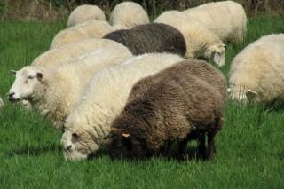 Cuso en A Pobra do Caramiñal sobre iniciación y mejora de la ganadería de ovino y caprino