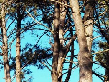 Curso en Vimianzo de gestión integral de pinos