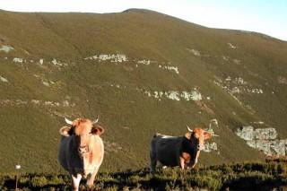 A Carqueixa impulsa la comercialización de carne desde el ganadero al consumidor
