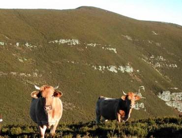 Las vacas y los caballos contribuyen a tener un monte con vegetación diversa