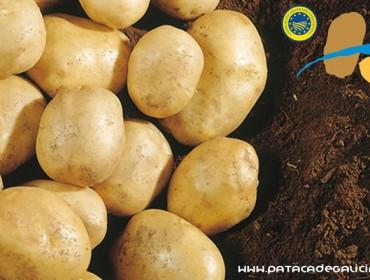 Esta primavera se prevé que la IGP Patata de Galicia se amplíe a todo el territorio gallego