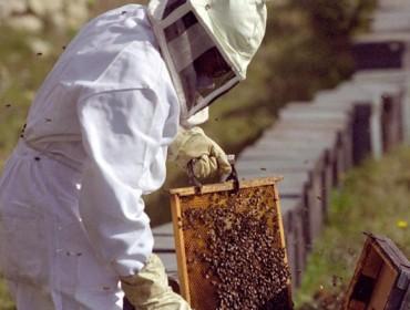 Programa integral de formación apícola de la EFA Fonteboa