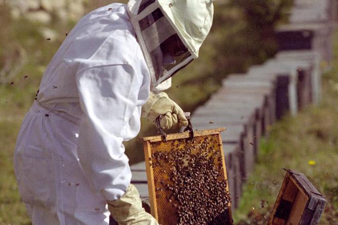 Consejos para el cuidado de las abejas en esta época