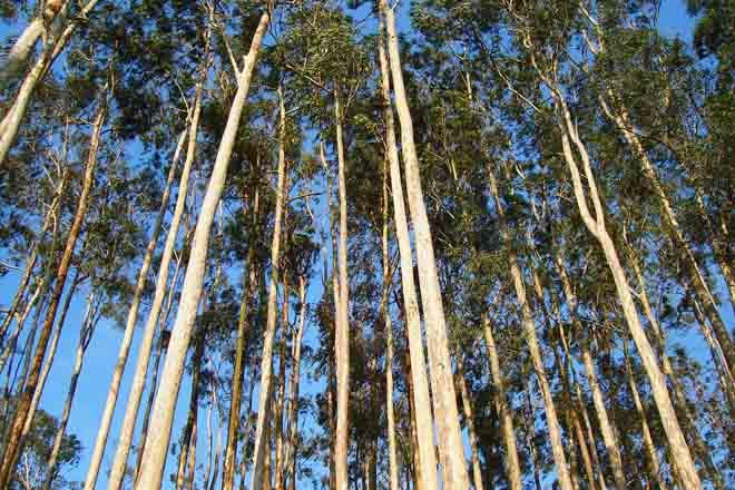 Suspendidas dos empresas forestales portuguesas en el sello FSC por declaraciones falsas