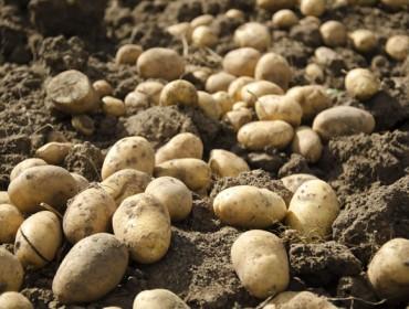 Curso en Xinzo de Limia sobre posibilidades de comercialización de la patata en ecológico