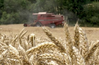 Los productores de cereal de ALimiacritican el modelo de pago verde creado por laXunta