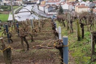 Curso de viticultura y enología