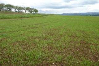 Recomendaciones del Ciam para la fertilización de prados y praderas