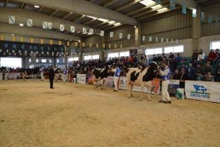 El concurso de ganado frisón de la Moexmu tendrá por primera vez carácter autonómico el próximo año