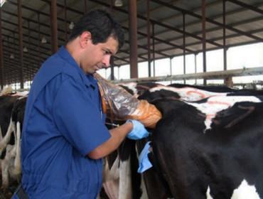 Curso de inseminación artificial de vacuno en Monforte de Lemos