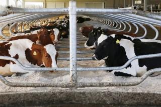 ERIMSAlanza las arenasQBED, recomendadas como camas para vacas