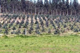 Objetivo de recuperación de tierras para la leche, 35.000 hectáreas