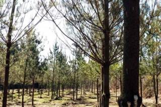 Abierto el plazo para solicitar ayudas para la plantación de coníferas y frondosas caducifolias
