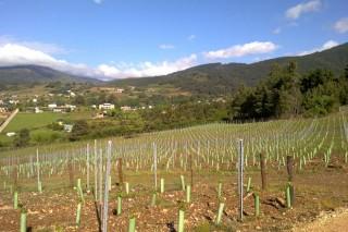 Resumen de la nueva normativa europea para plantar viñedo