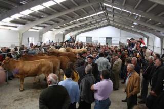 El bajo precio de la carne preocupa a los criadores de raza rubia gallega