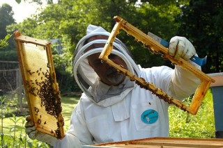 Recomendaciones para los apicultores para evitar el contagio del coronavirus