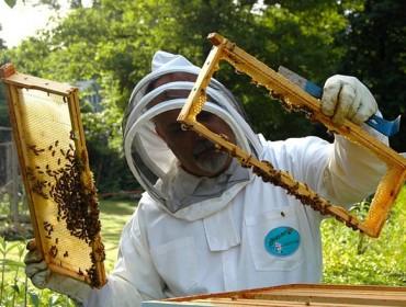 Jornada sobre las ayudas para la incorporación a la apicultura