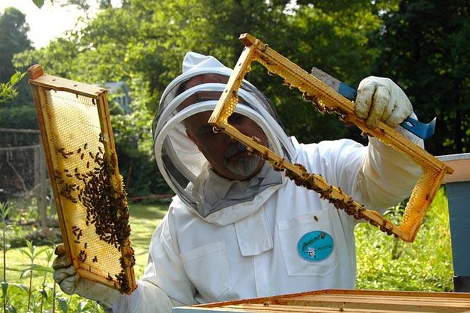 Diversificación y nuevas tecnologías, claves para mejorar la rentabilidad de los apicultores