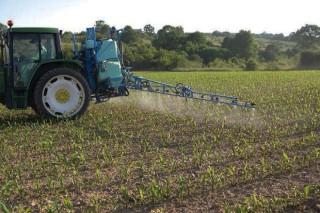 Identificación de plantas adventicias en el cultivo del maíz