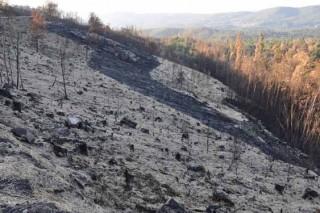 La Xunta aplicará 'helimulching' con paja en 166 hectáreas de los incendios de Ourense