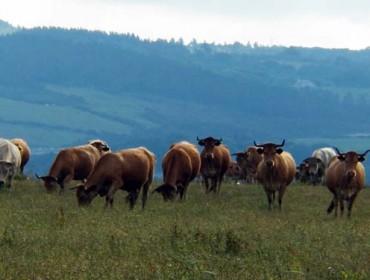 Medidas de Ternera Gallega y Vaca Gallega / Buey Gallego ante el coronavirus