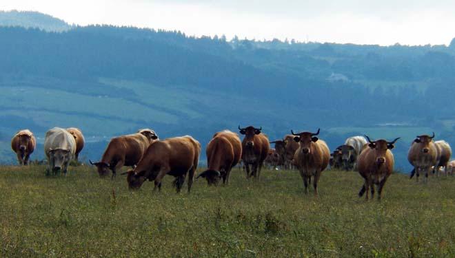 Las comunidades de la Cornisa Cantábrica se unen para pedir más hectáreas elegibles en la PAC