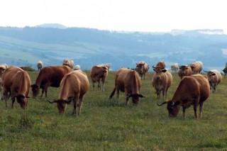 El campo hace balance de daños por la crisis del coronavirus
