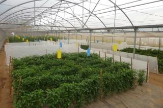 Mabegondo incorporará una veintena de variedades autóctonas de hortalizas y cereales a su Banco de Germoplasma