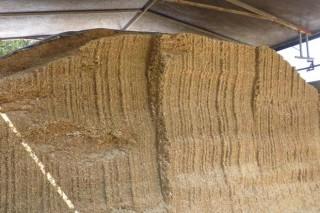 Consejos para el ensilado del maíz (III): como reducir el deterioro del silo