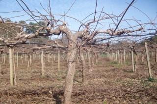 Areeiro recomienda tratar los cultivos ante la subida de las temperaturas