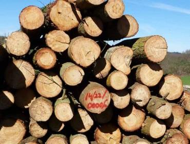 El sector forestal se forma en tecnologías móviles