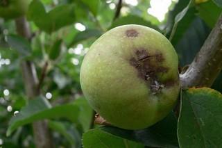 Jornada sobre identificación y control de plagas en frutales