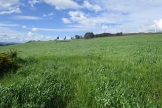 Recomendaciones para un buen abonado de las praderas en primavera