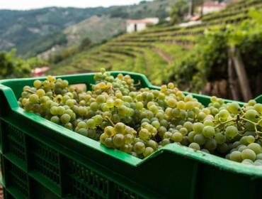 Curso gratuito en la Ribeira Sacra de acercamiento al mundo del vino