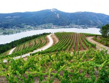 El Sindicato Labrego pide medidas de apoyo para el sector del vino