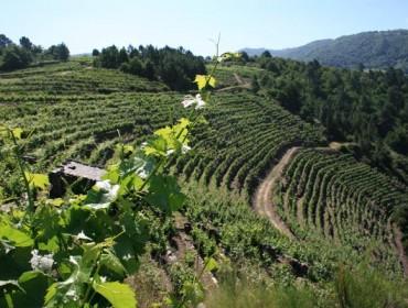 Vinos de pago: ¿Una alternativa para Galicia?