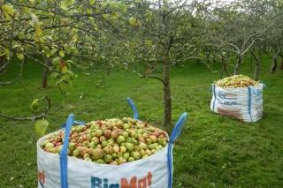 Jornadas sobre «Cuidados culturales en los manzanos de sidra: aclareo de frutos»