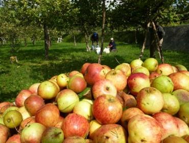 Curso sobre cultivo y manejo de la manzana de sidra en ecológico