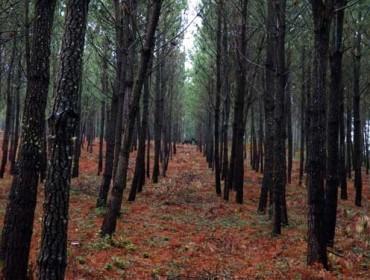 El monte gallego absorbe el 30% de los gases de efecto invernadero emitidos en Galicia